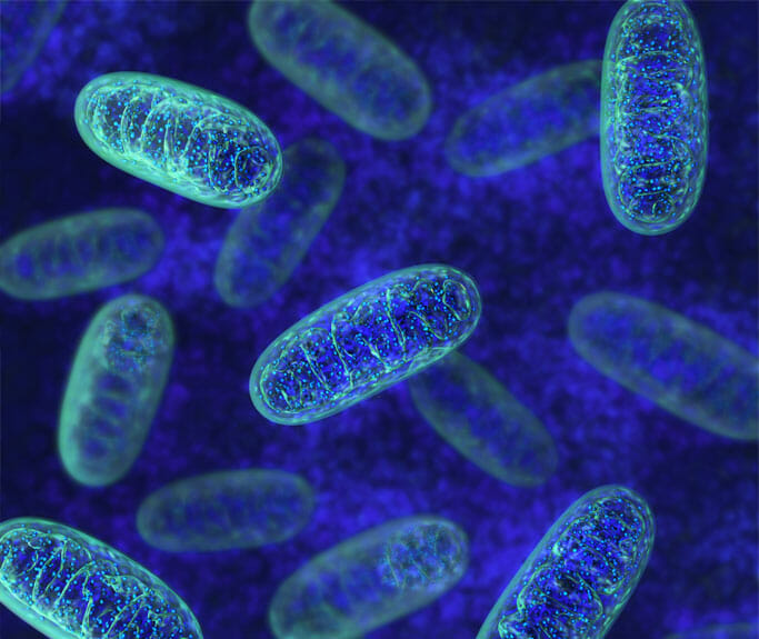 Mitochondrial Disease, Causes and Treatment - Physician Partners Of America